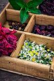 Hierbas medicinales Fotos de archivo libres de regalías
