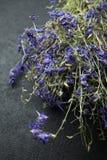 Hierbas medicinales de la cura en un fondo negro foto de archivo