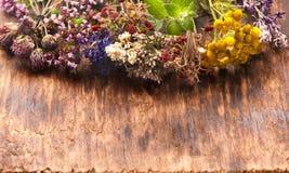 Hierbas medicinales frescas y secadas Imagen de archivo libre de regalías