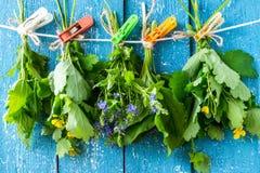 Hierbas medicinales para la medicina herbaria secada fotos de archivo libres de regalías