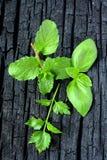 hierbas Menta, albahaca y perejil Fotografía de archivo libre de regalías