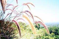 Hierbas ornamentales en un jardín californiano Fotografía de archivo
