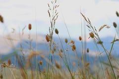 Hierbas que se mueven en el viento Foto de archivo