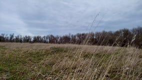 Hierbas que soplan del viento en un día nublado en una pradera de Dakota del Norte almacen de metraje de vídeo