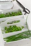 Hierbas recién cosechadas de la cocina del jardín Fotos de archivo libres de regalías