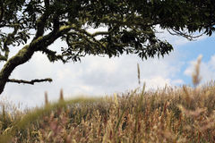 Hierbas salvajes Fotografía de archivo