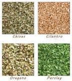 Hierbas secadas (cebolletas, cilantro, perejil, orégano) Imagen de archivo libre de regalías