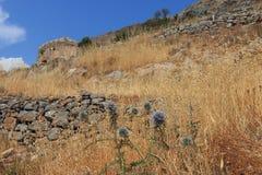 Hierbas secadas de Spinalonga Fotografía de archivo