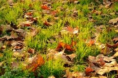 Hierbas transparentes y hojas que caen entre ellos Imagen de archivo libre de regalías