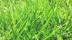 Hierbas verdes en primer del verano imagen de archivo libre de regalías