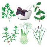 Hierbas verdes fijadas con el mortero y la maja stock de ilustración