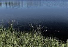 Hierbas y agua tranquila con las sombras profundas fotografía de archivo libre de regalías