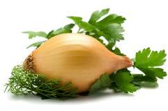 Hierbas y cebolla aromáticas Foto de archivo
