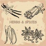 Hierbas y especias libre illustration
