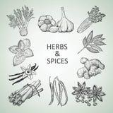 Hierbas y especias Ilustración del Vector