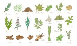 Hierbas y especias, bosquejo de la cocina del garabato del vector Foto de archivo libre de regalías