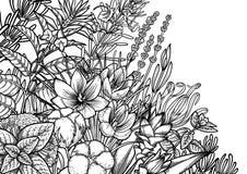 Hierbas y especias gráficas libre illustration