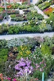 Hierbas y flores Fotografía de archivo libre de regalías