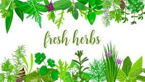 Hierbas y flores realistas frescas populares Logo Label Set siluetas verdes libre illustration