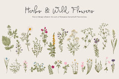 Hierbas y flores salvajes stock de ilustración