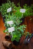 Hierbas y plantas para replantar Fotos de archivo libres de regalías