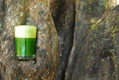 Hierbas y vehículos curativos verdes orgánicos de la naturaleza Foto de archivo