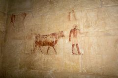 Hieroglyphic carving of Egyptians in color in an ancient tomb. Ancient hieroglyphic carving of Egyptian and cerimonial cow in color in a tomb Stock Photography