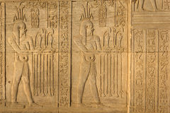 Hieroglyphic carvings in Kom Ombo temple, Egypt. Detailed view of ancient Egyptian hieroglyphic carvings in Kom Ombo temple stock photos