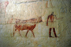 Hieroglyphics antiguos Foto de archivo libre de regalías