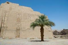 Hieroglyphische Carvings auf einer ägyptischen Tempelwand Stockbilder