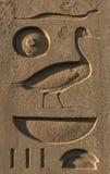 Hieroglyphs egípcios Imagem de Stock Royalty Free