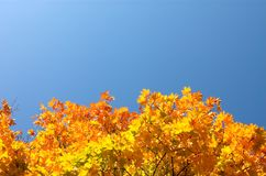 Hieronder de bladeren van de esdoorn Stock Foto's