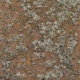 Hierro Oxidado-peludo fotografía de archivo libre de regalías
