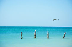 Higgs beach pier, bird, seagull, cormorant, wooden stakes, sea, Key West, Keys. Key West, Keys, Cayo Hueso, State of Florida, Sunshine State, coast, Gulf of Stock Images