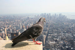 High above manhattan Stock Image