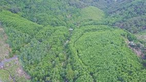High Aerial View Jungle and Forest Plantations by Lake. High aerial panorama road jungle and forest plantations by blue wonderful tranquil highland lake stock footage