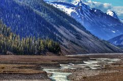 High Alpine Creek. A high alpine creek winding through the mountains near the Columbia ice fields, Alberta, Canada Royalty Free Stock Photos