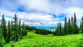 High Alpine forest and meadows and forests. High Alpine forest and meadows at the village of Sun Peaks in the Shuswap Highlands of British Columbia, Canada royalty free stock photos