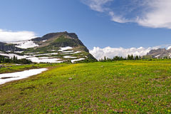 High Alpine Meadow in the Summer Royalty Free Stock Photography