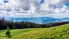High Alpine Meadows with Pine Beetle affected Trees Stock Images