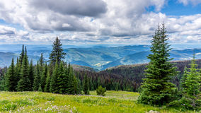 High Alpine Meadows & Pine Beetle royalty free stock photos