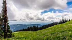 High Alpine Meadows and Wild Flowers Stock Images
