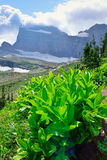 High alpine panoramic landscape of the Grinnell Glacier trail in Glacier national park, montana Royalty Free Stock Photos