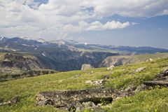 High Alpine Tundra Stock Images