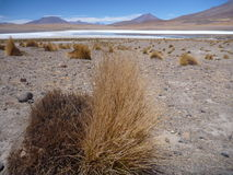 High altiplano sulphuric lake in bolivia Royalty Free Stock Photography