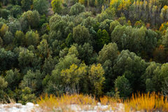 High altitude beautiful  landscape autumn Larch tree forest . Stock Images