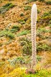 High Altitude Cactus Stock Photo