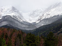 The Tree Line. At high altitude in the Colorado Rocky Mountains stock photography