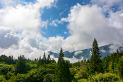 High altitude forest and billowing clouds at Alishan National Forest in Chiayi District, Taiwan Stock Photography