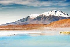 High-altitude lagoon on the plateau Altiplano, Bolivia Royalty Free Stock Photography